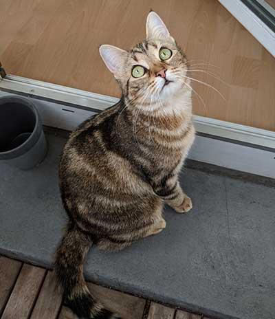 Katze auf unserem Balkon